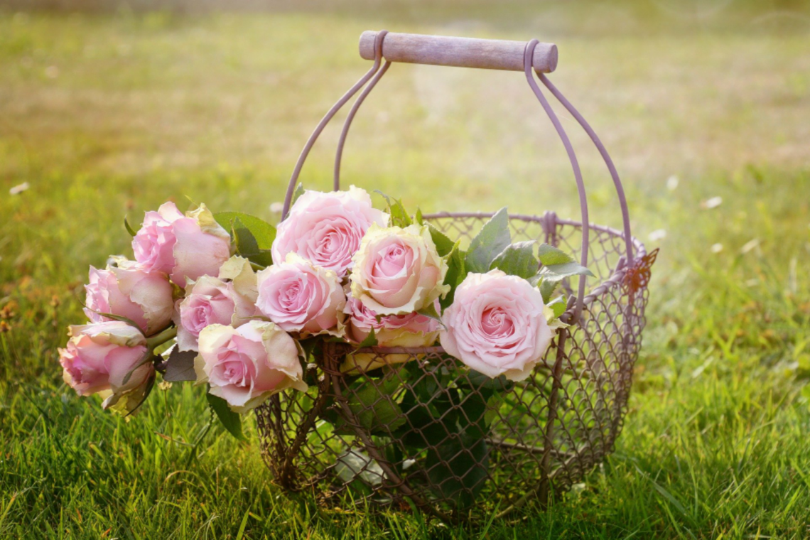 a basket of roses.